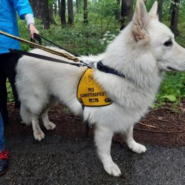 Canis pobyt 6/2020 (Sv. Štěpán)